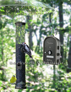 Bird Watching Cameras