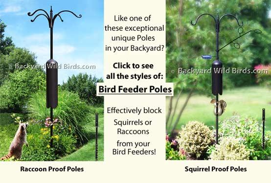 Merveilleux Previous; Next. Welcome To Backyard Wild Birds ...