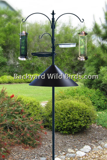 One Way To Keep Squirrels From Eating Birdseed Gifs