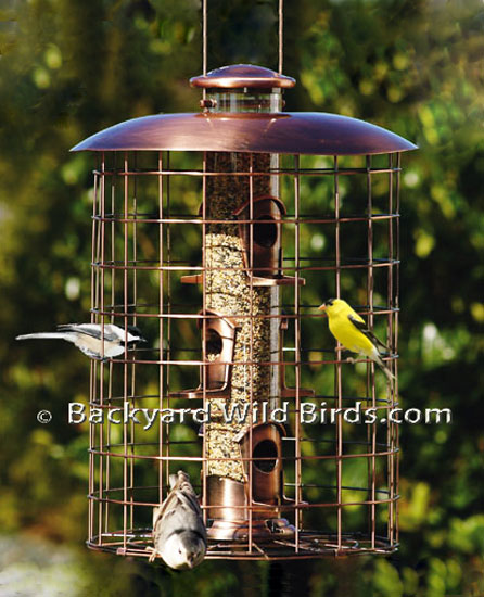 Squirrel Proof Bird Feeder Designs At Backyard Wild Birds