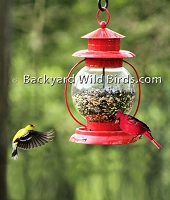 Red Lantern Bird Feeder