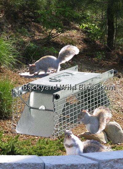 Squirrel Trap Transporter