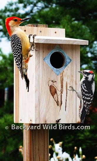 woodpecker bird house