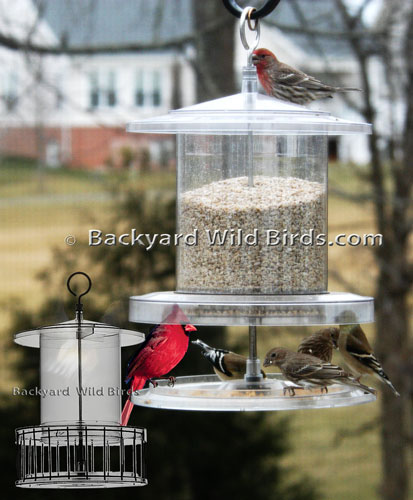 All Weather Bird Feeder