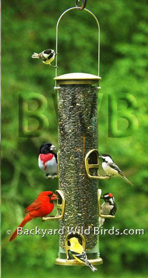 Merveilleux Backyard Wild Birds
