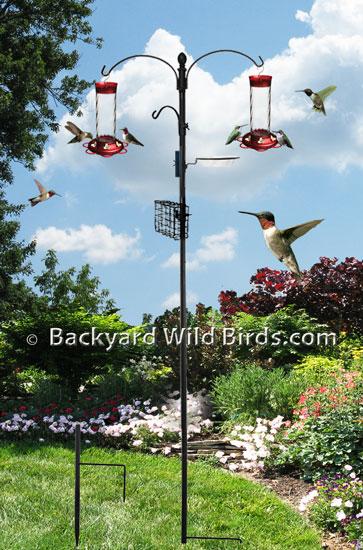 Attract Hummingbirds To Feeders At Backyard Wild Birds