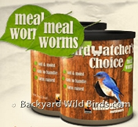 Choice Mealworms