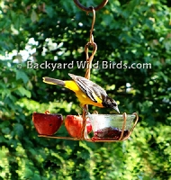 Copper Fruit Jelly Oriole Feeder