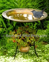 Copper Embossed Rim Bird Bath
