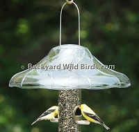 Fancy Bird Feeder Baffle