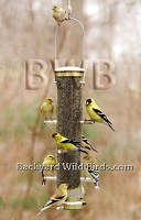 Finch Thistle Tube Bird Feeder