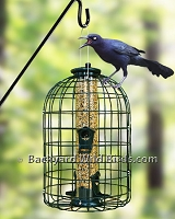 Special Bird feeders