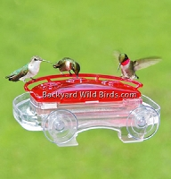 Jewel Box Hummingbird Window Feeder