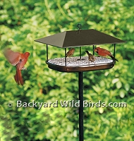 Metal Platform Bird Feeder