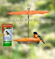 Orange Oriole Bird Feeder Set
