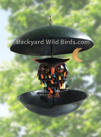 Superbe Backyard Wild Birds