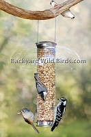Stainless Steel Peanut Bird Feeder
