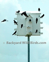 Purple Martin House Crescent Doors