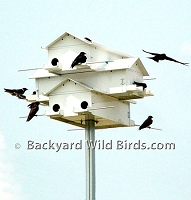 Purple Martin Stackable Houses