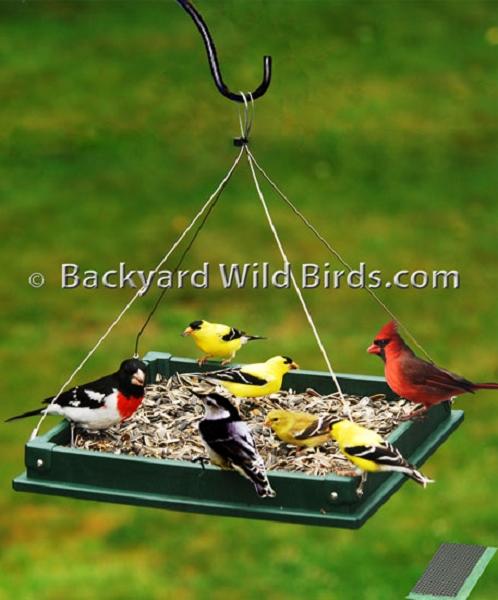 Recycled Platform Bird Feeder