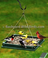 Recycled Platform Bird Feeder