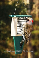 Recycled Suet Bird Feeder