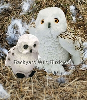 Snowy Owl Mom And Chick