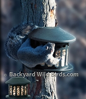 Squirrel Diner Feeder
