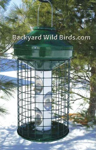 squirrel proof cage bird feeder