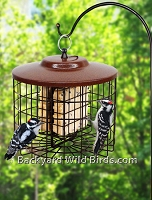 Squirrel Proof Suet Duo Bird Feeder