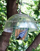 Suet Bird Feeder With Baffle