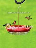 Hummingbird High Perch Feeder