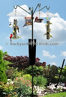 Bird Feeder S Pole Raccoon Proof System