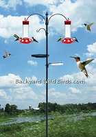 Hummingbird Feeder Station Pole Kit