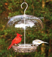 Wild Bird Tray Bird Feeder