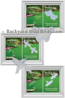 Window Bird Srike Decals