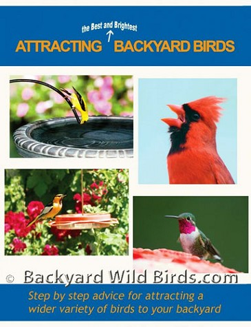 Attracting Backyard Birds Dvd
