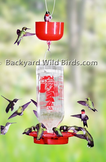 Best 1 Hummingbird Feeder with Guard