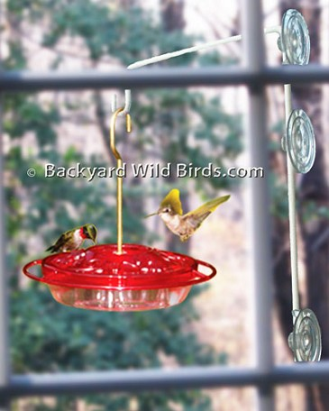 Fancy Window Hummingbird Feeder