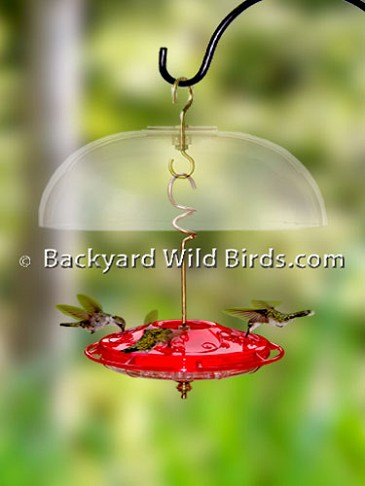Hummingbird Feeder and Dome
