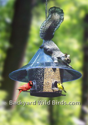 Mandarin Hanging Bird Feeder