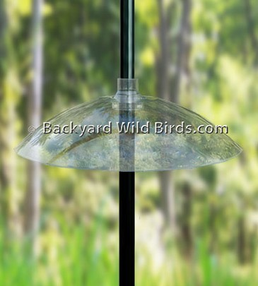 Pole Squirrel Baffle At Backyard Wild Birds