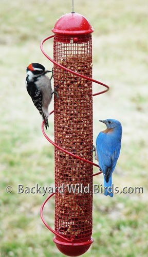 Spiral Peanut Bird Feeder