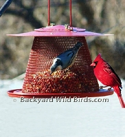 Metal Cardinal Bird Feeder