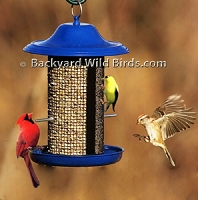 Cobalt Blue Bird Feeder