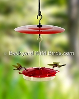 Hummingbird Feeder and Red Dome
