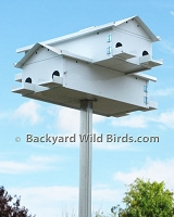 Purple Martin House Goliad Jr