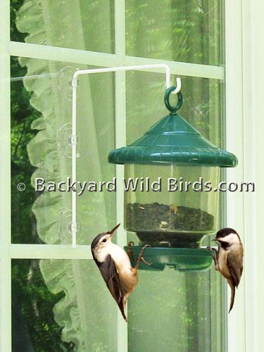 petzuna suction cup of coffee bird feeder