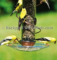 Spiral Bird Feeders Tray