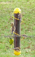 Spiral Goldfinch Bird Feeder